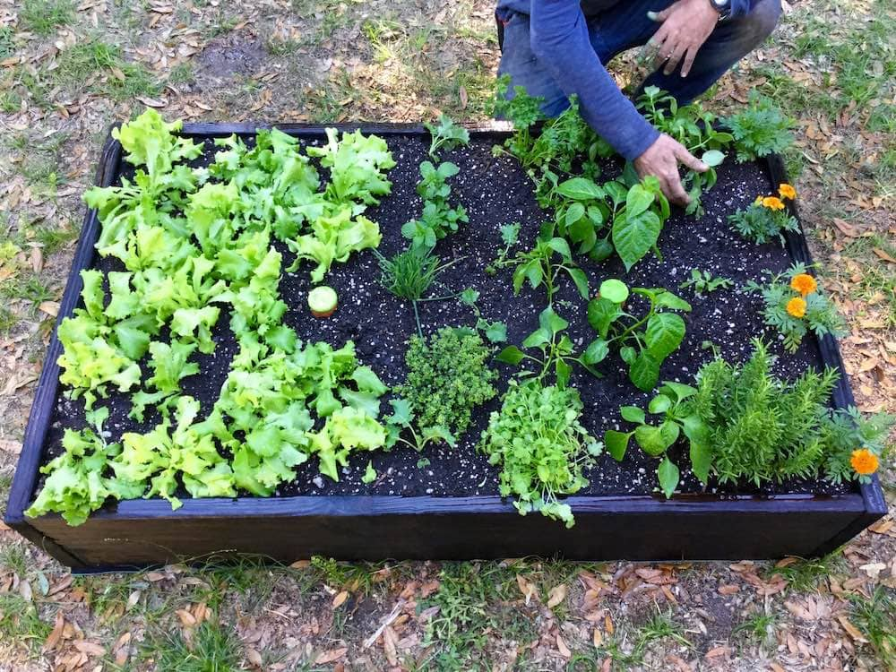 A healthy garden - Gardens for the People